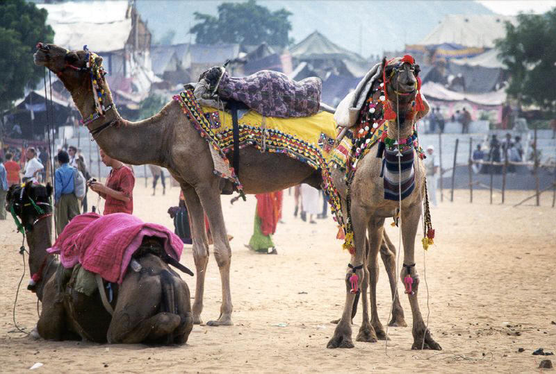 incredible rajasthan holiday tour for your Incredibleholidayindia offers holidays in india, holiday packages, india travel holiday, golden triangle, religious tour packages at affordable prices.